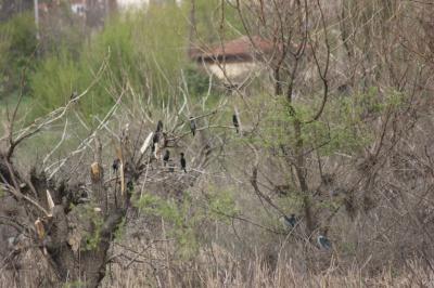 Αποικία Ερωδιών στο Kardzhali